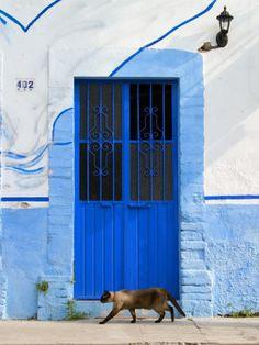 Blue door and cat