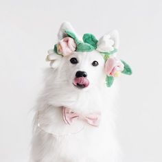 pupchella over coachella any day 🌷 dog lover dog mom flower crown Christmas Gifts For Pets, Christmas Animals, Japanese Spitz, Dog Birthday, Dog Treats, Flower Crown, Coachella, Dog Mom, Fur Babies