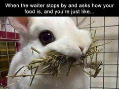 Funny Memes  At the restaurant http://ift.tt/2lnjLEE