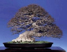Extraordinary Bonsai listed by Kuanghua Hsiao on Facebook. There is also an incredible Penjing (tray landscape - Chinese translation is tray scenery) shown in this same article.