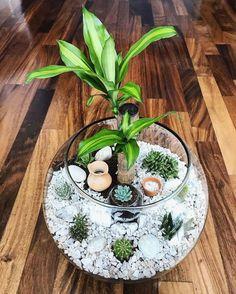 35 Beautiful DIY Vertical Garden in the Backyard « Decor Diy Best Succulents In Glass, Succulent Bowls, Succulent Gardening, Succulent Arrangements, Planting Succulents, Terrarium Plants, Succulent Terrarium, House Plants Decor, Plant Decor