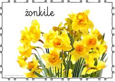 Polish Language, Teacher Inspiration, Daffodils, Toddler Activities, Kids And Parenting, Education, Spring, Welsh, Poland