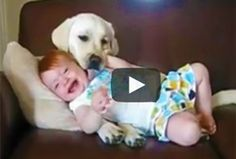 Exactly like my son!!! hilarious and cute!! Humor | Video - babies laughing at dogs