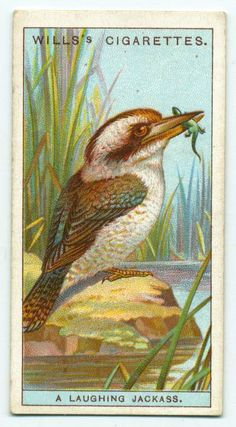 """Wills """"Do You Know"""" cigarette cards 1922"""
