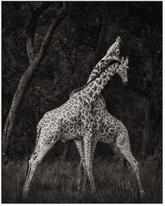 :-) Photography by Nick Brandt