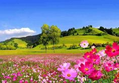 Field flowers - flowers & nature background wallpapers on desktop Beautiful Flowers Wallpapers, Beautiful Photos Of Nature, Beautiful Nature Wallpaper, Nature Photos, Amazing Nature, Beautiful Landscapes, Beautiful Gardens, Beautiful Places, Beautiful Pictures
