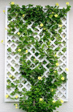 Amazing Balcony Ivy Ideas - Unique Balcony & Garden Decoration and Easy DIY Idea. Amazing Balcony Ivy Ideas – Unique Balcony & Garden Decoration and Easy DIY Ideas diy id Garden Trellis, Balcony Garden, Privacy Trellis, Garden Swings, Wall Trellis, Garden Walls, Porch Swings, Garden Bed, Plant Wall