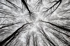 Perspective is a powerful photography tool that can take a normal, everyday photo to another level. In this case, Fotodenis gives us an alternate perspective of a forest by taking a steep upwards shooting angle. The result is a lengthening of the trees, giving them an outstretched look, as though they're trying to reach the sky. There's great contrast in this shot as well. Bravo!