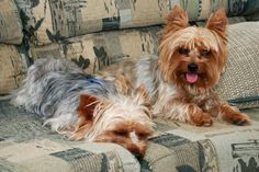 Bring Bedding – Prepare a space inside your motorhome for when your motorhome is not in motion.  Place his bed, blanket and favorite sleeping buddy in one spot of the motorhome where he will have a space of his own that resembles home. Your pet will feel safe and appreciate his familiar bed.