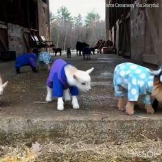 Just some kids in their PJ's - animal love - Cute Funny Animals, Cute Baby Animals, Funny Cute, Animals And Pets, Cute Dogs, Cute Babies, Cute Animal Videos, Funny Animal Pictures, Cute Pictures