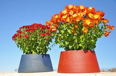 Large Corkit - Large flower pots made of cork by Besta Cork  $36