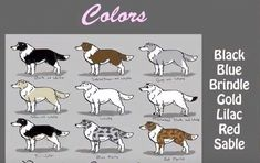 Short and simple video guide to Border Collies!