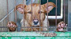 Une institution américaine supprime toutes les données sur le bien-être animal de son site  En savoir plus : http://www.maxisciences.com/bien-etre-animal/une-institution-americaine-supprime-toutes-les-donnees-sur-le-bien-etre-animal-de-son-site_art39206.html Copyright © Gentside Découverte