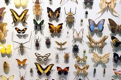 Insectarium Montreal. 4581 Rue Sherbrooke E. Plus de 144 000 insectes (live or naturalized)!