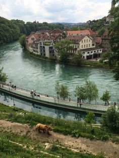 Sveitsin pääkaupunki Bern, karhujen kaupunki