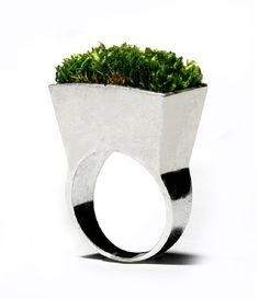A ring with real plantlife growing on it - just water once every 5 months! #jewelry €150 http://www.walletburn.com/Growing-Ring_902.html