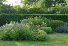 Isobel Bilgen Gardens - Hedge line behind the perennial bed annunciates the color