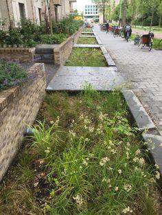 Watervertragende groenstrook Kop Zuidas | Amsterdam Rainproof Green Architecture, Sustainable Architecture, Landscape Architecture, Landscape Design, Garden Design, Landscape Concept, Green Landscape, Rain Garden, Water Garden