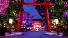 下鴨神社 糺(たたず)の森の光の祭