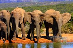 African safari: off to see the elephants. African Animals, African Elephant, African Safari, Camping Places, Places To Travel, Places To Visit, South Africa Safari, Water For Elephants, Adventures By Disney