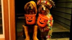 Trick or Treating Dogs, via YouTube.