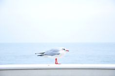 Photo by davide ragusa on Unsplash Free Photos, Free Stock Photos, Free Images, Free Pictures, Bird Pictures, Nature Pictures, Krishnamurti, Bird Free, Free High Resolution Photos
