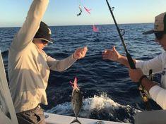 Football Blackfin Tuna On The Troll Tuna Fishing, Best Fishing, Blackfin Tuna, Terminal Tackle, Fishing Report, Boynton Beach, Can Run, Short Trip, Celine Dion