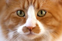 Cat - http://www.1pic4u.com/blog/2014/09/17/cat-40/
