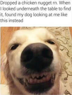 Funny, Memes, Pictures: funny-animals-1-6-1
