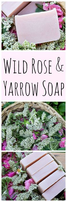 Get the recipe for this gorgeous natural soap made with foraged wild roses and yarrow!