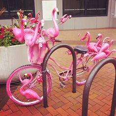 This practical and understated bicycle: | 25 Things You'll Only See In Florida