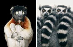 Photographer Spends 2 Years Photographing Animals That May Soon Be Extinct, And It Breaks Our Hearts | Bored Panda