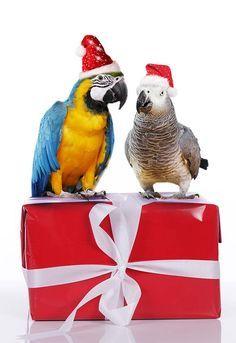 God Jul önskar sötisar Elisabet Nystrand