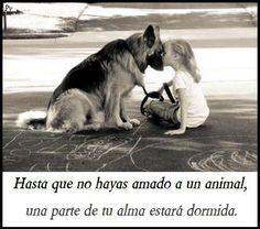 When you love an animal, your soul will wake up!