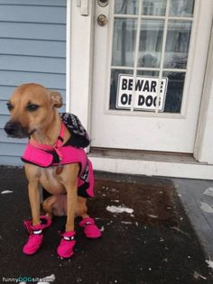 Pink Shoes - funnydogsite.com #dogs #funny #cute
