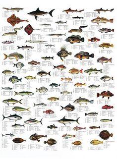 poissons méditerranéens