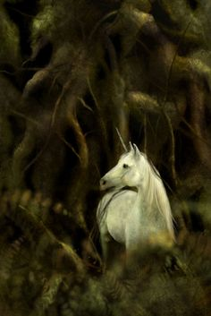 Stunning, mystical unicorn.