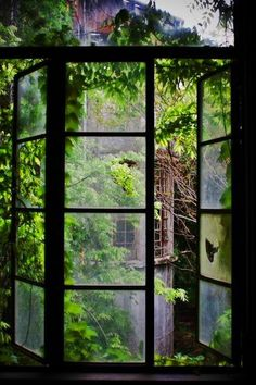 Looking out into the conservatory