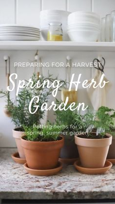 Garden Boxes, Herb Garden, Vegetable Garden, Garden Plants, Indoor Plants, Homestead Gardens, Terracotta Pots, Summer Garden, Spring Crafts