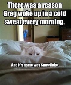 Funny animals pictures of the hour – 10 pics