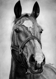 Chestnut Horse by on - gemalte Pferde - Horse Pencil Drawing, Horse Drawings, Realistic Drawings, Animal Drawings, Art Drawings, Drawing Art, Pencil Art, Pencil Drawings, Horse Sketch