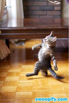 Whahaha. This Cat Looks Like A Boss #humor #lol #funny