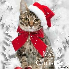 Vote Sticker, Christmas Images, Gifs, Cat Love, December, Creations, Cards, Animals, Heart