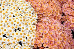 New post on daisiesforgratitude