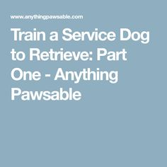 Train a Service Dog to Retrieve: Part One - Anything Pawsable