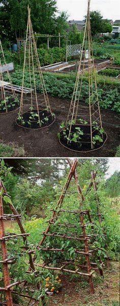 6. Build pea tepees structure to make the harvesting and maintenance more easier. - 22 Ways for Growing a Successful Vegetable Garden #smallvegetablegardeningideas #vegetablegardening  #VegetableGardening