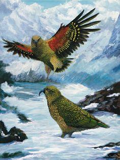 Birds Painting - Kea by Peter Jean Caley Flower Tattoo Foot, Flower Tattoos, New Zealand Mountains, Fat Bird, New Zealand Tattoo, Key Tattoos, Skull Tattoos, Foot Tattoos, Sleeve Tattoos