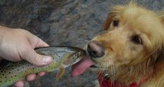 These dogs love to go fishing!