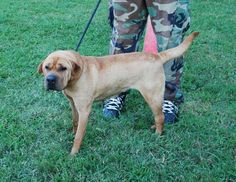 Facebook...Charlie to the Rescue Crossposts check this dog out urgent