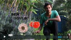 Ever wondered how to get your tomatoes to grow into trees? Ben Gould brings us our second One MInute Tip, this time in the garden!